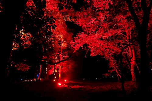 red lights in the forest